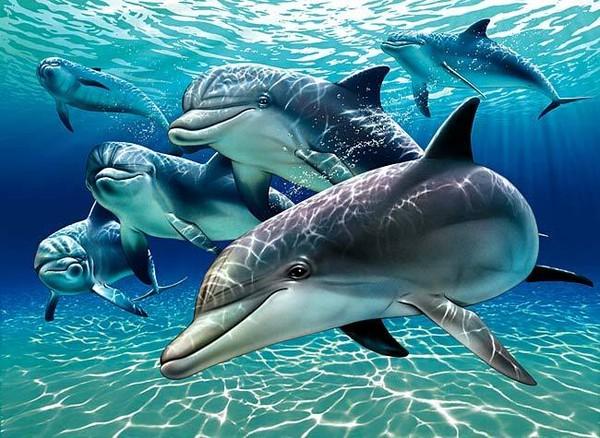 sunlit_dolphin_pa.jpg