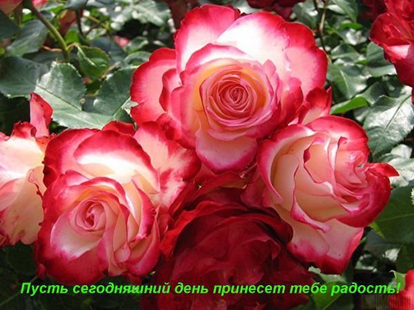 9957238_Dobruyy_den1.jpg