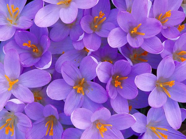 Flowers11_1024x768.jpg